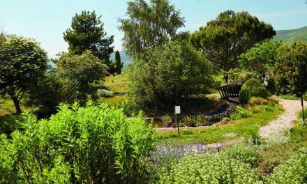 Bienvenue dans le Jardin Botanique de Sanoflore